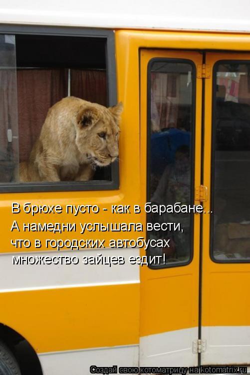 Котоматрица: В брюхе пусто - как в барабане... А намедни услышала вести, что в городских автобусах множество зайцев ездит!