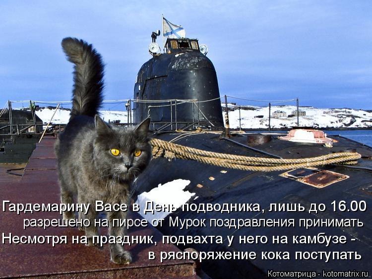 Котоматрица: Гардемарину Васе в День подводника, лишь до 16.00 разрешено на пирсе от Мурок поздравления принимать  Несмотря на праздник, подвахта у него на