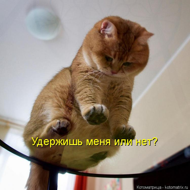 Котоматрица: Удержишь меня или нет?