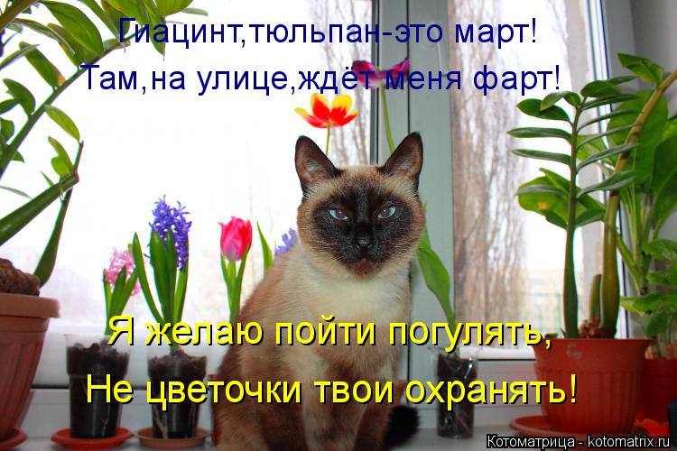 Котоматрица: Гиацинт,тюльпан-это март! Там,на улице,ждёт меня фарт! Я желаю пойти погулять, Не цветочки твои охранять!