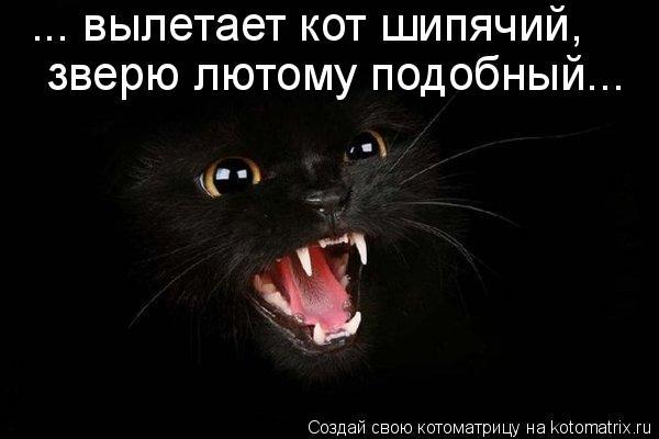 Котоматрица: ... вылетает кот шипячий,  зверю лютому подобный...