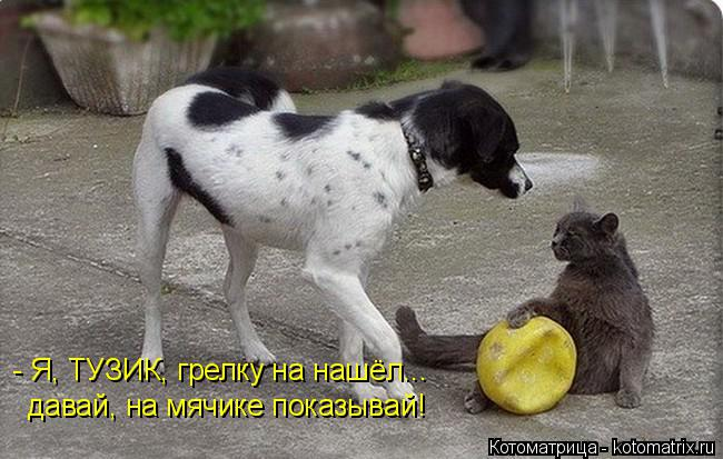 Котоматрица: - Я, ТУЗИК, грелку на нашёл... давай, на мячике показывай!