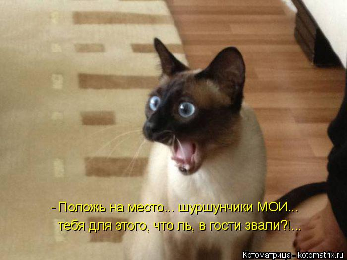 Котоматрица: - Положь на место... шуршунчики МОИ... тебя для этого, что ль, в гости звали?!...