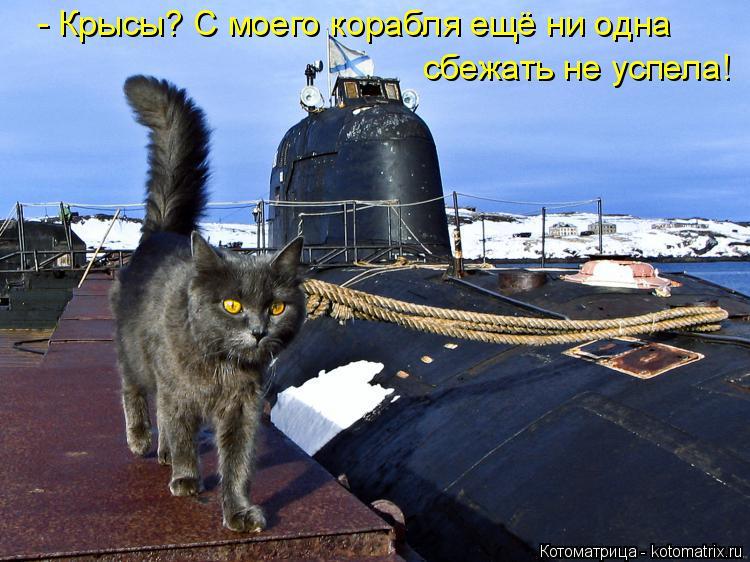 Котоматрица: - Крысы? С моего корабля ещё ни одна сбежать не успела!