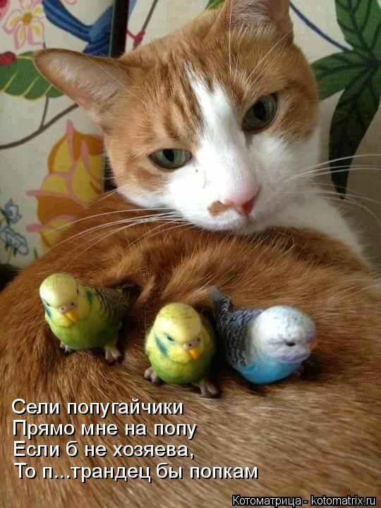 Котоматрица: Сели попугайчики Прямо мне на попу Если б не хозяева, То п...трандец бы попкам