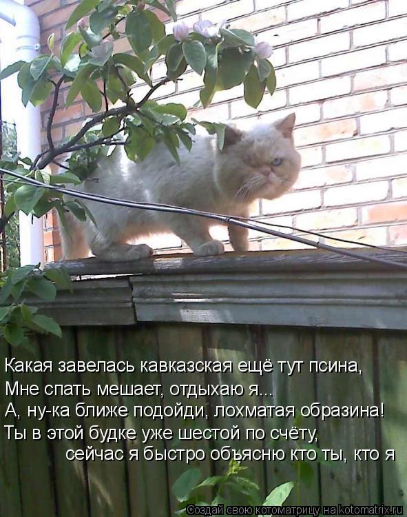 Котоматрица: Какая завелась кавказская ещё тут псина, Мне спать мешает, отдыхаю я... А, ну-ка ближе подойди, лохматая образина! Ты в этой будке уже шестой п