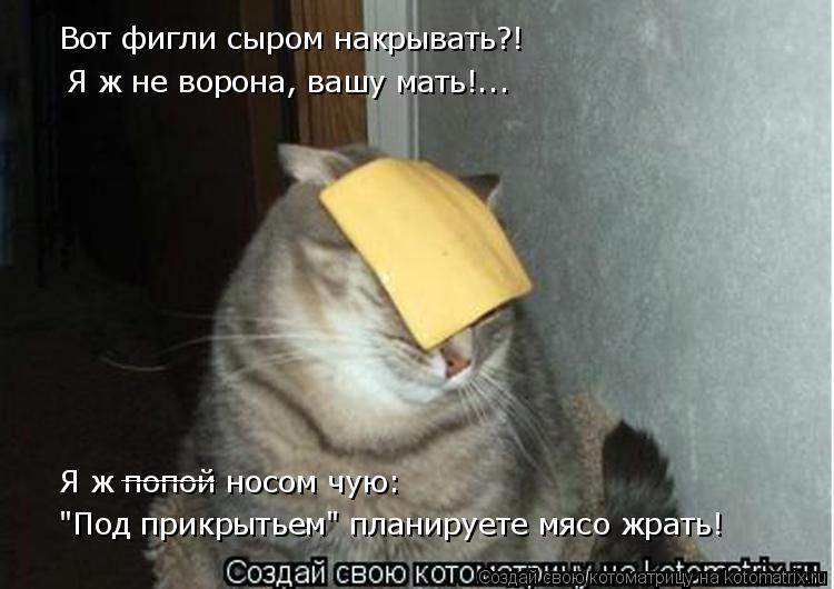 """Котоматрица: Вот фигли сыром накрывать?! Я ж не ворона, вашу мать!... Я ж попой носом чую: """"Под прикрытьем"""" планируете мясо жрать! _____"""