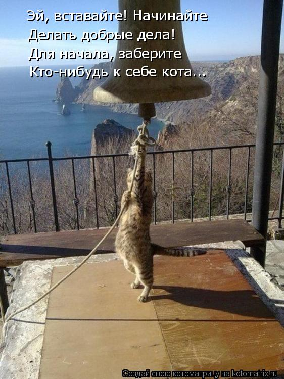 Котоматрица: Эй, вставайте! Начинайте Делать добрые дела! Для начала, заберите Кто-нибудь к себе кота...