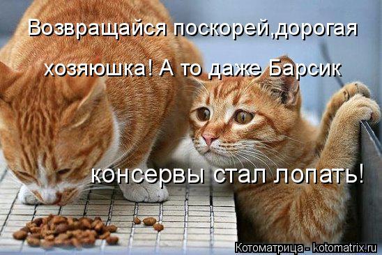 Котоматрица: Возвращайся поскорей,дорогая хозяюшка! А то даже Барсик консервы стал лопать!