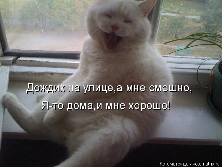 Котоматрица: Дождик на улице,а мне смешно, Я-то дома,и мне хорошо!