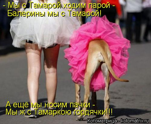 Котоматрица: - Мы с Тамарой ходим парой - Балерины мы с Тамарой! А ещё мы носим пачки -  Мы ж с Тамаркою гордячки!!!