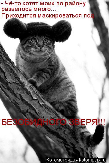 Котоматрица: - Чё-то котят моих по району  развелось много.... Приходится маскироваться под  БЕЗОБИДНОГО ЗВЕРЯ!!!