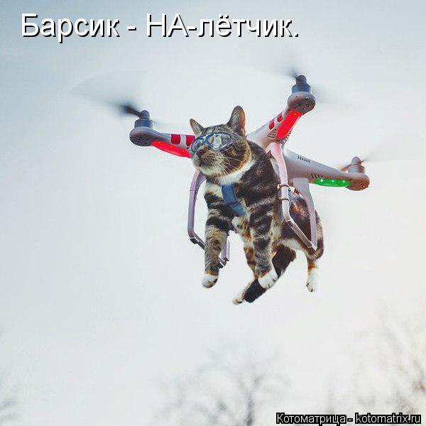 Котоматрица: Барсик - НА-лётчик.