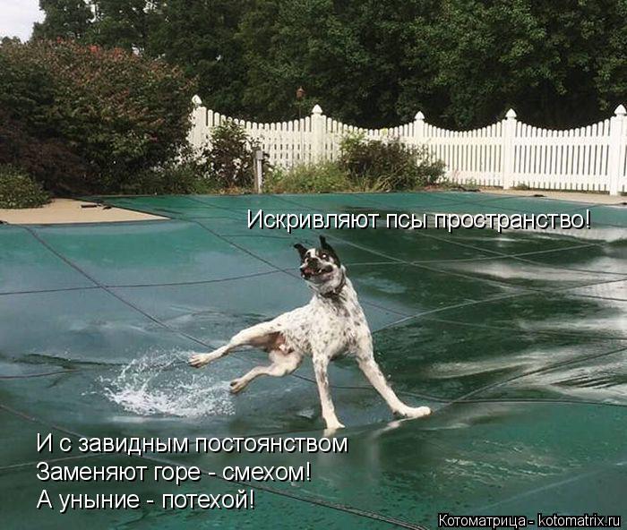 Котоматрица: Искривляют псы пространство! И с завидным постоянством Заменяют горе - смехом! А уныние - потехой!
