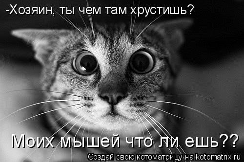 Котоматрица: -Хозяин, ты чем там хрустишь? Моих мышей что ли ешь??
