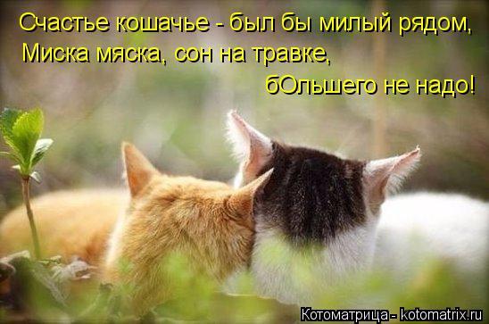 Котоматрица: Счастье кошачье - был бы милый рядом, Миска мяска, сон на травке, бОльшего не надо!