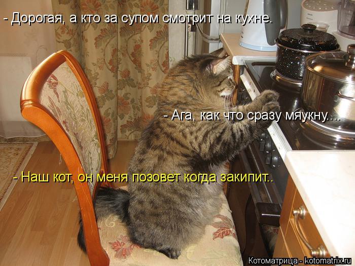 Котоматрица: - Дорогая, а кто за супом смотрит на кухне. - Наш кот, он меня позовет когда закипит.. - Ага, как что сразу мяукну....