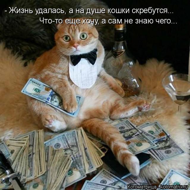 Котоматрица: - Жизнь удалась, а на душе кошки скребутся... Что-то еще хочу, а сам не знаю чего...