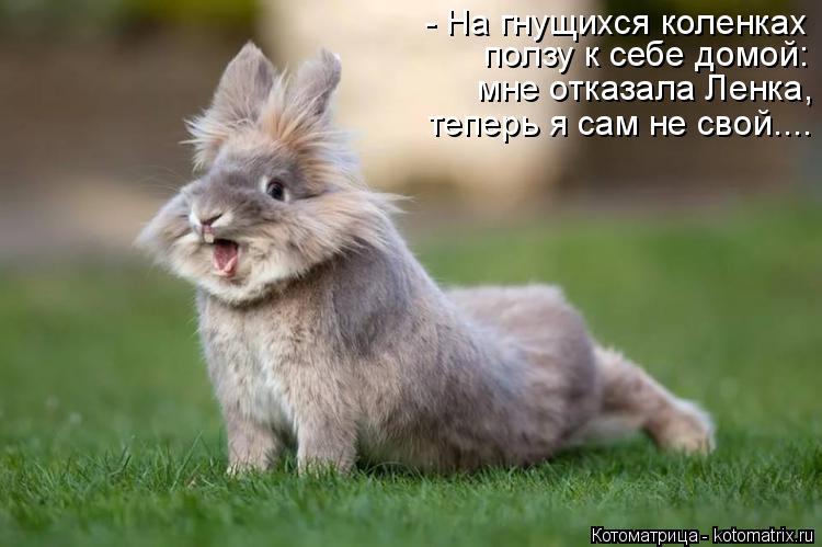 Котоматрица: - На гнущихся коленках ползу к себе домой:  мне отказала Ленка, теперь я сам не свой....