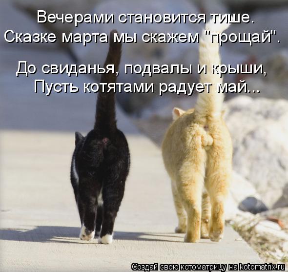 """Котоматрица: Вечерами становится тише. Сказке марта мы скажем """"прощай"""". Пусть котятами радует май... До свиданья, подвалы и крыши,"""