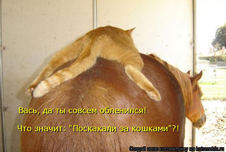 """Котоматрица: Вась, да ты совсем обленился!  Что значит: """"Поскакали за кошками""""?!"""