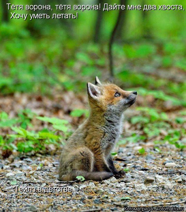 Котоматрица: Тётя ворона, тётя ворона! Дайте мне два хвоста, Хочу уметь летать! *Тейлз в детстве.
