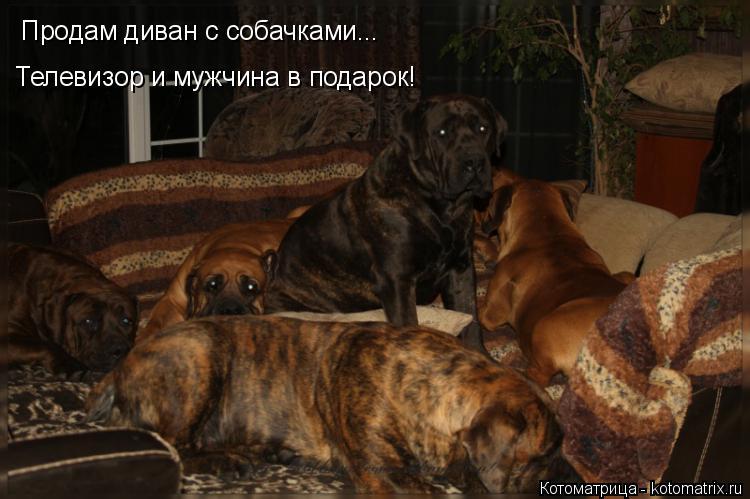 Котоматрица: Продам диван с собачками... Телевизор и мужчина в подарок!