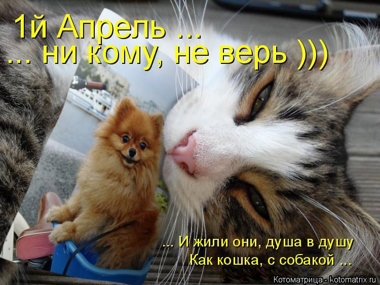 Котоматрица: 1й Апрель ... ... ни кому, не верь ))) ... И жили они, душа в душу Как кошка, с собакой ...