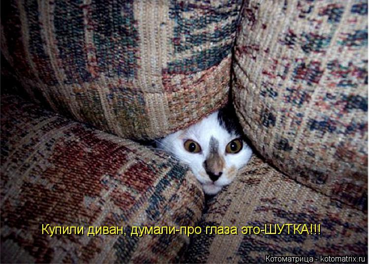 Котоматрица: Купили диван, думали-про глаза это-ШУТКА!!!