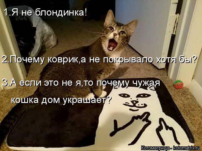 Котоматрица: 1.Я не блондинка! 2.Почему коврик,а не покрывало хотя бы? 3.А если это не я,то почему чужая кошка дом украшает?