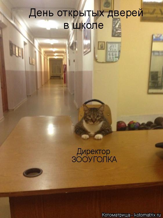 Котоматрица: День открытых дверей в школе Директор ЗООУГОЛКА