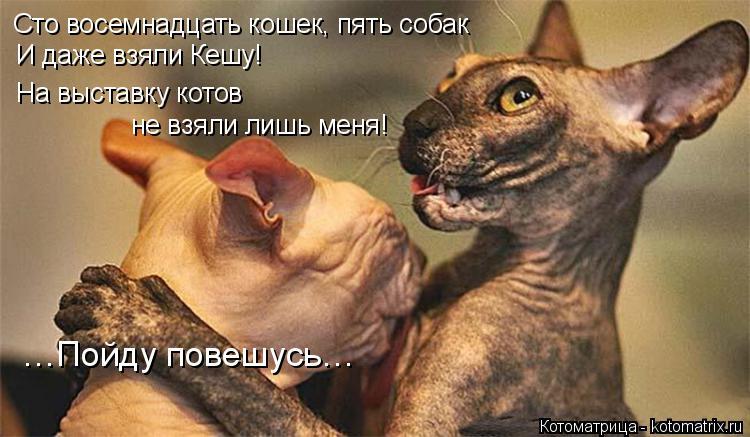 Котоматрица: Сто восемнадцать кошек, пять собак И даже взяли Кешу! На выставку котов  не взяли лишь меня! …Пойду повешусь…
