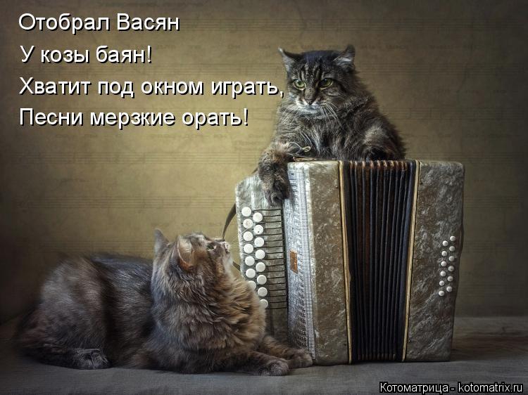 Котоматрица: Отобрал Васян У козы баян! Хватит под окном играть, Песни мерзкие орать!