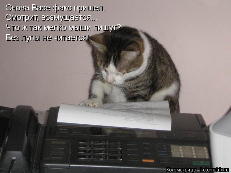 Котоматрица: Снова Васе факс пришел. Смотрит, возмущается... Что ж так мелко мыши пишут? Без лупы не читается!