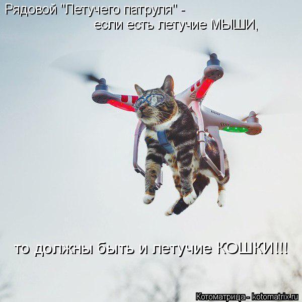 """Котоматрица: Рядовой """"Летучего патруля"""" -   если есть летучие МЫШИ,  то должны быть и летучие КОШКИ!!!"""