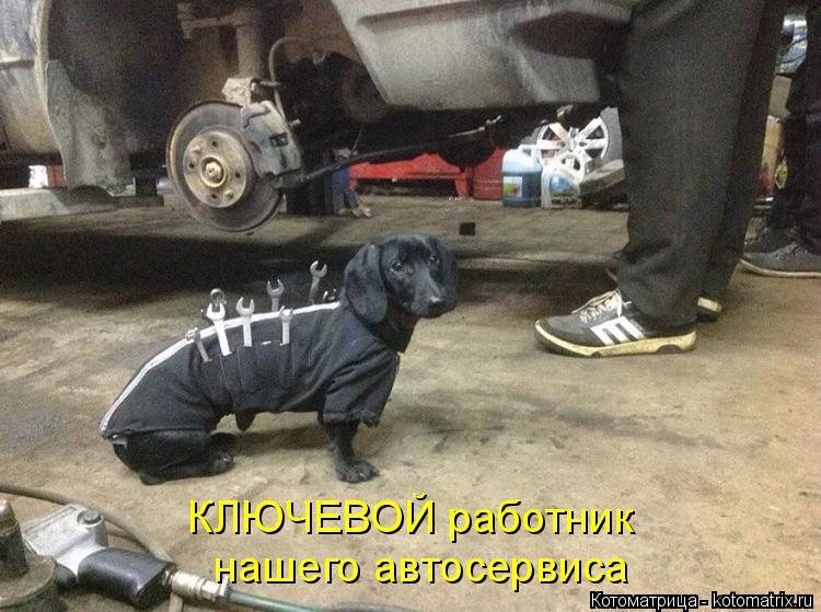Котоматрица: КЛЮЧЕВОЙ работник  нашего автосервиса