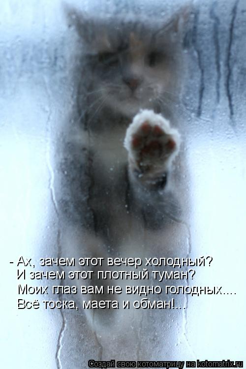 Котоматрица: - Ах, зачем этот вечер холодный? И зачем этот плотный туман? Всё тоска, маета и обман!... Моих глаз вам не видно голодных....