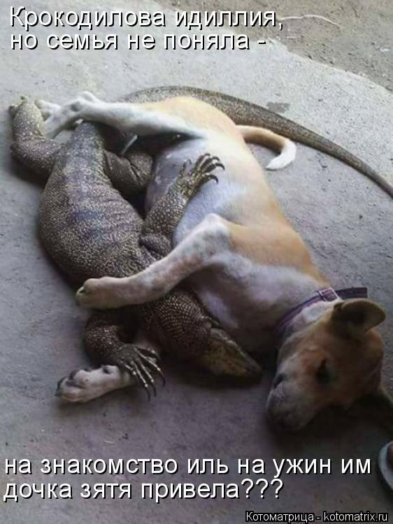 Котоматрица: Крокодилова идиллия,  но семья не поняла -  на знакомство иль на ужин им  дочка зятя привела???