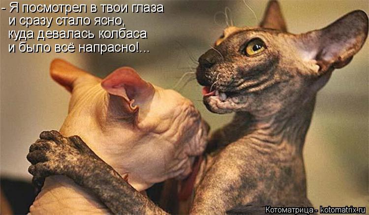 Котоматрица: - Я посмотрел в твои глаза и сразу стало ясно, куда девалась колбаса и было всё напрасно!...