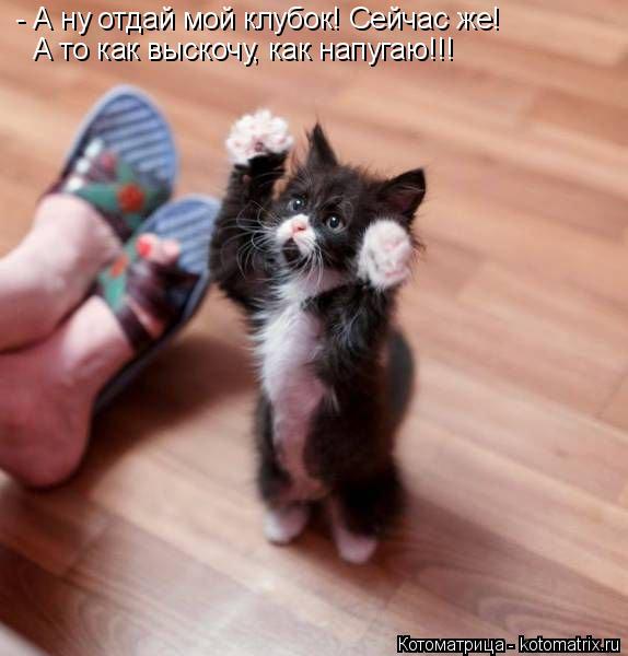 Котоматрица: - А ну отдай мой клубок! Сейчас же! А то как выскочу, как напугаю!!!