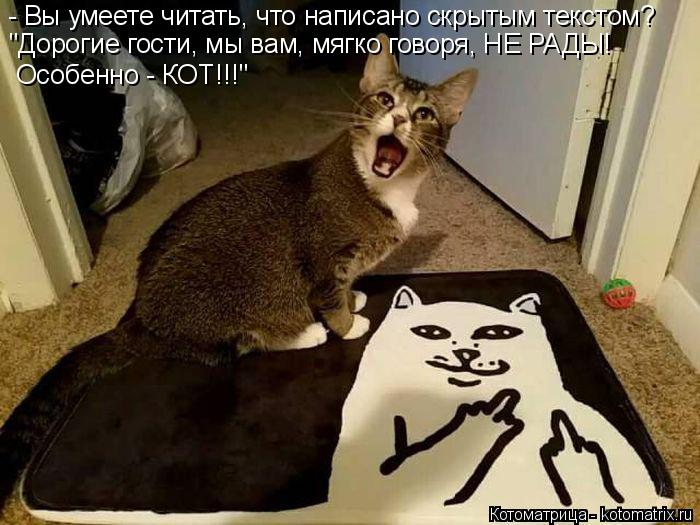 """Котоматрица: - Вы умеете читать, что написано скрытым текстом? """"Дорогие гости, мы вам, мягко говоря, НЕ РАДЫ!  Особенно - КОТ!!!"""""""