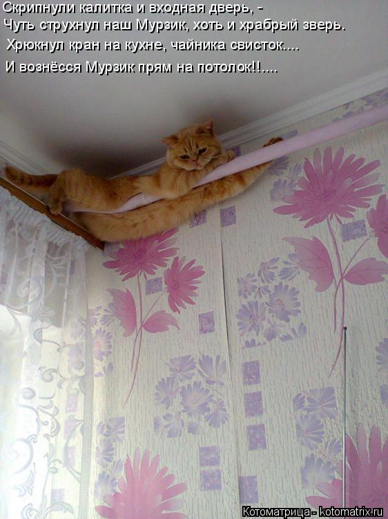 Котоматрица: И вознёсся Мурзик прям на потолок!!.... Хрюкнул кран на кухне, чайника свисток....  Чуть струхнул наш Мурзик, хоть и храбрый зверь. Скрипнули кал