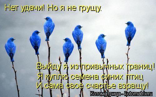 Котоматрица: Нет удачи! Но я не грущу. Выйду я из привычных границ! Я куплю семена синих птиц И сама своё счастье взращу!