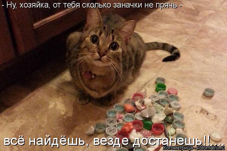 Котоматрица: - Ну, хозяйка, от тебя сколько заначки не прячь -  всё найдёшь, везде достанешь!!....