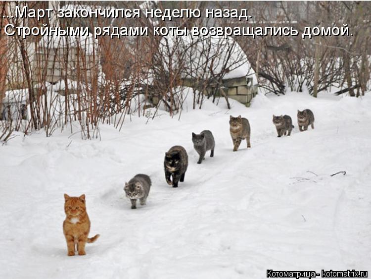 Котоматрица: ...Март закончился неделю назад. Стройными рядами коты возвращались домой.