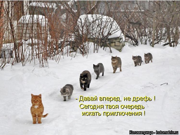 Котоматрица: - Давай вперед, не дрефь ! Сегодня твоя очередь  искать приключения !