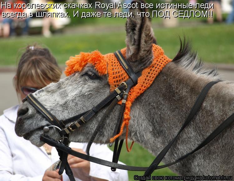 Котоматрица: На королевских скачках Royal Ascot все истинные леди всегда в шляпках. И даже те леди, что ПОД СЕДЛОМ!!