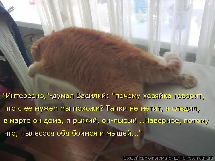"""Котоматрица: """"Интересно,""""-думал Василий: """"почему хозяйка говорит,  что с её мужем мы похожи? Тапки не метит, я следил,  в марте он дома, я рыжий, он-лысый...Нав"""