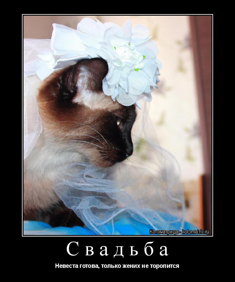Котоматрица: Свадьба Невеста готова, только жених не торопится