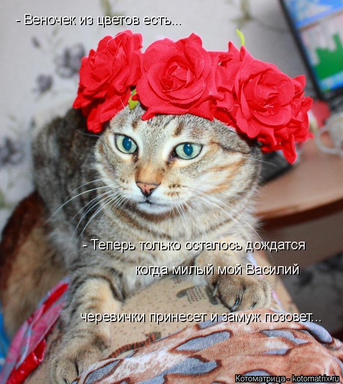 Котоматрица: - Веночек из цветов есть... - Теперь только осталось дождатся когда милый мой Василий черевички принесет и замуж позовет...